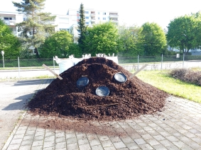 Rindenmulch-Monster am Anpflanztag im Mai 2017