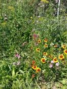 Blumenwiese im Lebens.Garten
